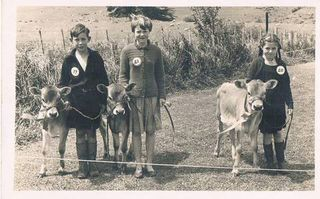 Puriri Calf Club